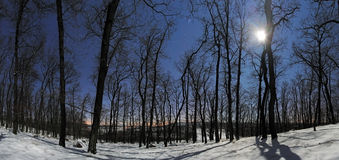 Forest panorama at winter moonlight night Stock Images