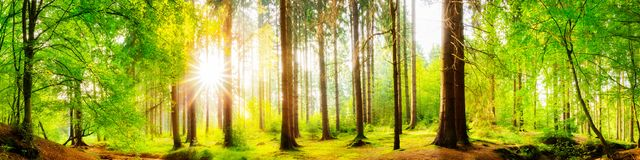 Free Forest Panorama With Bright Sun Stock Photography - 102557572
