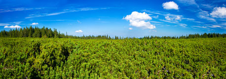 Forest panoramaXXL Stock Images