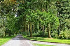 Forest parc roads and trees Stock Photography