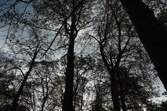 The forest in Paris. France. Royalty Free Stock Images