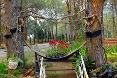 Forest Park Ταϊλάνδη Στοκ εικόνες με δικαίωμα ελεύθερης χρήσης