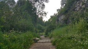 Forest Park της Σιβηρίας Στοκ εικόνες με δικαίωμα ελεύθερης χρήσης