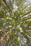 Forest Park Στοκ φωτογραφίες με δικαίωμα ελεύθερης χρήσης
