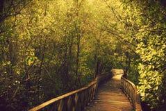 Forest Park fotografia stock libera da diritti