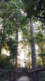 Forest Park Стоковое фото RF