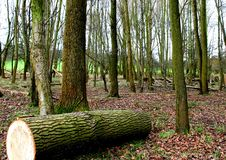 Forest Park Стоковое Изображение RF