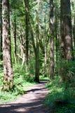 Forest Park Arkivbild