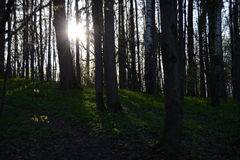 Forest Park 免版税库存图片