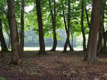 Forest Park Fotografia de Stock Royalty Free