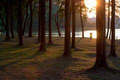 Forest Park au coucher du soleil Photo libre de droits
