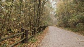 Forest / park autumn after the rain. Panning Shot. Panning shot - forest / park in autumn, after the rain stock video