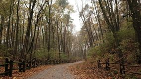 Forest / park autumn after the rain. Tilting Shot. Tilting shot - forest / park in autumn, after the rain stock footage