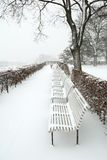 Forest park in wintertime Royalty Free Stock Photo