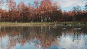 Forest Park colorido no outono filme