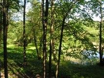 10 Forest Park ?DROZDY ?em Minsk Bielorr?ssia fotografia de stock royalty free
