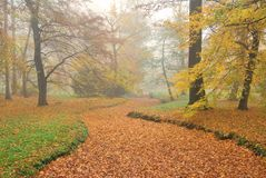 Forest park and dry rivulet bed with fallen leaves in misty autu Stock Image