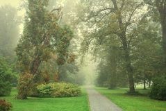Forest park footpath and trees in fog Royalty Free Stock Image