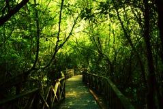 Forest park. Garden Stock Photos