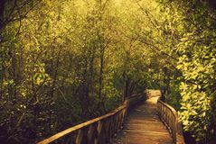 Forest park. Garden Royalty Free Stock Photography