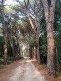 Forest Park Golden Cape photos stock