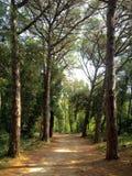 Forest Park Golden Cape image libre de droits