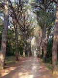 Forest Park Golden Cape photo libre de droits