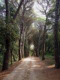 Forest Park Golden Cape photographie stock
