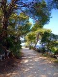 Forest Park Golden Cape Images libres de droits