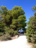 Forest Park Golden Cape Image stock