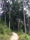 Forest Park Golden Cape photo stock
