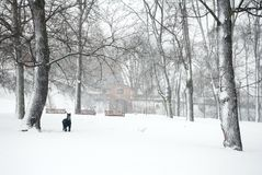 Forest park in heavy snow storm Stock Photography