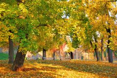 Forest Park with multicolored tree leaves in autumn Stock Photography