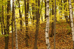 Forest or park in october time Royalty Free Stock Images