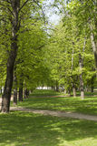 Forest park. Old forest with deciduous trees in big park Stock Photo