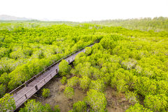 Forest Park Pranburi, επαρχία Prachuap Khiri Khan, Ταϊλάνδη Στοκ εικόνες με δικαίωμα ελεύθερης χρήσης