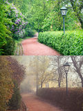 Forest Park in Spring and Autumn Seasons Stock Images