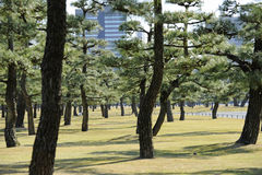 Forest park in Tokyo. A forest park near Imperial Palace, Tokyo Stock Photo