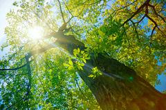 Forest or park trees in sunlight Stock Photos