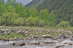 Forest Park, Wald, Park, Vegetation, Landschaft, Hintergrund, Tourismus, China, Qinghai gegenseitiges Forest Park, grünes, orient stockbilder