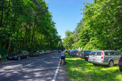 Forest parked cars Royalty Free Stock Image
