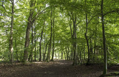 Forest passage. Dense forest with a settled path Stock Images