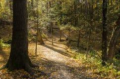 Forest Past mit dem Sun, der durch die Baumaste filtert lizenzfreie stockbilder