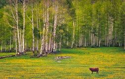 Forest Pasture Fotos de archivo libres de regalías