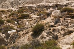 Forest Patagonia Argentina aterrorizado Fotos de archivo
