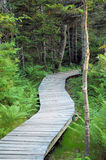Forest path. On a boardwalk Royalty Free Stock Photo