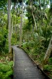 Forest path. A boardwalk meanders in a tropical Florida forest royalty free stock photos