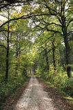 Forest path Royalty Free Stock Photos