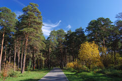 Forest_path Image stock