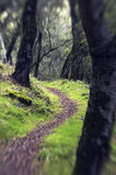 Forest Path. A forest path way shot with a Lensbaby soft focus lens Stock Image